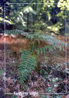 CPSM   Fougère  Aigle  (1996-pierron) - Flores, Plantas & Arboles