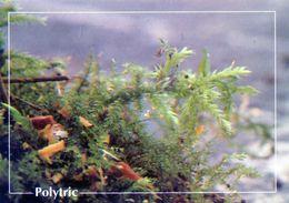 CPSM   Polytric   (1996-pierron) - Flores, Plantas & Arboles