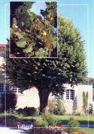 CPSM   Tilleut  (1996-pierron) - Flores, Plantas & Arboles