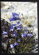Greenland FLOWERS Cards ( Lot 383 ) - Groenlandia
