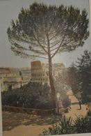 Italie. Rome. Le Colisée Vu Du Palatin. Photogravure Fin XIXe. - Stampe & Incisioni