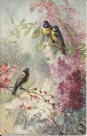 Carte Postale Ancienne Illustrateur Mary Golay - Oiseaux - Birds - Vogels Edit T.S.N. Nr 1234 - Otros Ilustradores