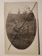 Photo Vintage. Original. Animaux. Femme Et Chevreuil. Lettonie D'avant-guerre - Objets