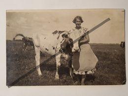 Photo Vintage. Original. Animaux. Fille Et Vache. Lettonie D'avant-guerre - Objets