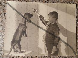 Photo Vintage Par V. Gailis. Original. Garçon Et Teckel. Chien. L'URSS. Lettonie - Objets