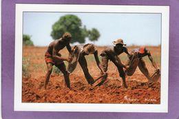 Région De NAPIEOLEDOUGOU Les Paysans Sénoufo Labourent Leur Champ à L'aide D'une DABA Photo Maurice ASCANI - Côte-d'Ivoire