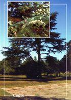 CPSM   Cèdre  (1996-pierron) - Flores, Plantas & Arboles