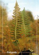 CPSM   Polypode    (1996-pierron) - Flores, Plantas & Arboles