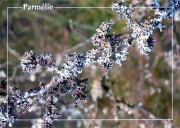 CPSM   Parmèlie  (1996-pierron) - Flores, Plantas & Arboles