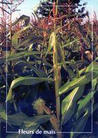 CPSm   Fleurs De Mais   (1996-pierron) - Flores, Plantas & Arboles