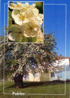 CPSm   Poirier   (1996-pierron) - Flores, Plantas & Arboles