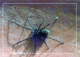 CPSm   Tègènaire   (1996-pierron) - Insectos