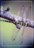 CPSm   Libellule  (1996-pierron) - Insectos