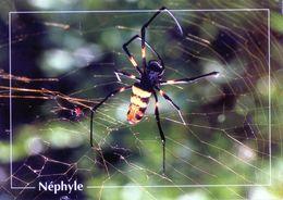 CPSm   Nèphyle (1996-pierron) - Insectos