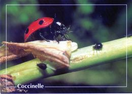 CPSm   Coccinelle (1996-pierron) - Insectos