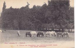 Aude - Château Des Chemineries Par Castelnaudary - Les Poneys Shetlandais - Castelnaudary