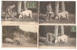 24 - DORDOGNE - Périgord - Périgueux - Lot De 14 Cartes Postales De La Recherche De Truffes Avec Un Cochon - Francia