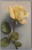 Blumen - Rose Gelaufen 1916 Von Eggenfelden - Flores