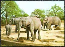 D8023 - Carl Hagenbeck Tierpark Zoo - Hamburg - Elefant - Elefantes