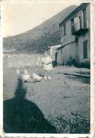 Photo Originale Enfant Et Poules - Persone Anonimi