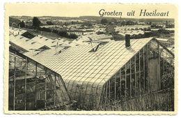 GROETEN  UIT  HOEILAART  -  Het Glazen Dorp / Les Serres - Hoeilaart
