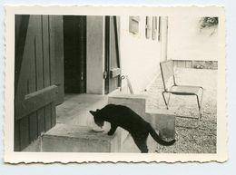Snapshot Black Cat Chat Noir Gato Nero - Persone Anonimi
