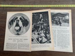 1918 JST POUR SAUVER NOS AMIS LES BETES SAINT BERNARD COMTESSE DE YOURKEVITCH CHENIL DE HOUILLES - Collections