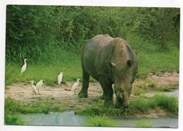 Botswana --1981-- Chobe National Park  --Rhinocéros - Botswana