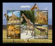 Liberia 2020 Mih. 7763/66 Fauna. Giraffes MNH ** - Liberia
