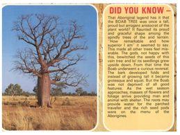 (B 18) Australia - Boab Tree - Árboles