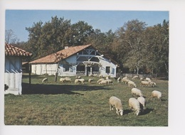 Marqueze Sabres Ecomusée Parc Landes De Gascogne - Maison Des Maîtres Dite Marqueze (cp Vierge) Mouton - Sabres