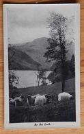 By The Loch - Ecosse / Scotland ?? - Troupeau De Moutons Au Bord D'un Lac - Sheeps - (n°18001) - Ecosse
