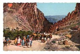 35924-ZE-ALGERIE-SCENES & TYPES D'AFRIQUE Du NORD-Les Gorges D'El Kantara---------animée - Algérie