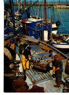 CP Débarquement De La Sardine (pas Référencée DOUARNENEZ) - Douarnenez