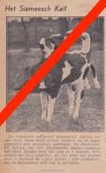 ZONHOVEN - SIAMEESCH KALF   1932  -  Tijdschriftafbeelding - Unclassified