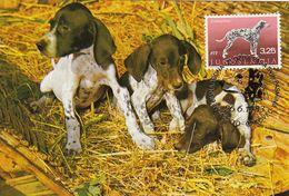 MAXIMUM CARD YUGOSLAVIA 1394,dogs - Maximum Cards