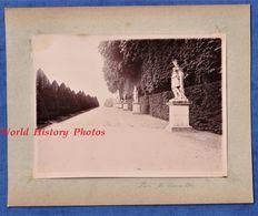 Photo Ancienne Vers 1900 - VERSAILLES - Allée Du Parc - Statue Patrimoine Histoire Sculpture - Photographe à Identifier - Anciennes (Av. 1900)