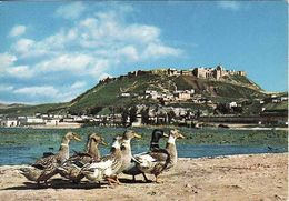 Syria, Champ De Ghab - Forteresse De Madik, Field Of Ghab - Fort Of Madik, Unused - Syrie