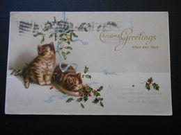 Petits Chats Jouant Avec Du Houx Sous Bouquet De Gui - Christmas Greetings - Série 4529 - Chats