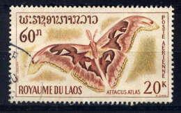 LAOS - A46° - ATTACUS ATLAS - Laos