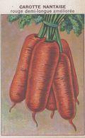 CHROMO - IMAGE  LEGUME  CAROTTE NANTAISE ROUGE DEMI-LONGUE AMELIOREE - Trade Cards