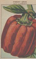 CHROMO - IMAGE  LEGUME  PIMENT GROS DOUX D'AMERIQUE - Trade Cards