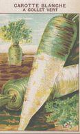 CHROMO - IMAGE  LEGUME  CAROTTE BLANCHE A COLLET VERT - Trade Cards