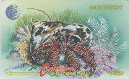 Montserrat, 7CMTD, Shells, Top Shell & Hermit Crab (Cittarium Pica), 2 Scans. - Montserrat