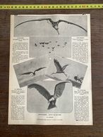 1910 JDV L ALBATROS FREGATE AVIATEURS SANS LE SAVOIR LE CONDOR CIGOGNES PIGEONS - Alte Papiere