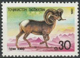 Tajikistan 1992 Fauna Mammals Altai Argali Dushanbe ZOO 1v MNH** 2.40 € - Tadjikistan