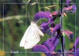 CPSm   Gazè (1996-pierron) - Insectos