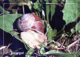 CPSm   Escagot  (1996-pierron) - Insectos