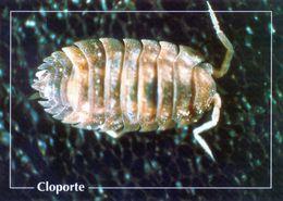 CPSm    Cloporte  (1996-pierron) - Insectos