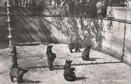 Cartoline - Postcard /  Non  Viaggiata - Unsent / Zoo Di  Berna - Fossa Con Gli Orsi - Osos